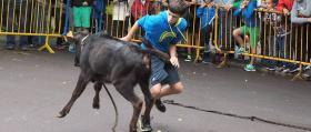 Feria_Maromas-becerro